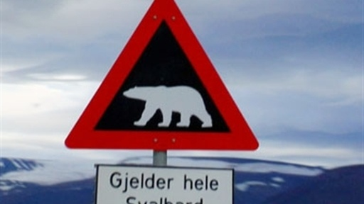 [Hikers Charged by Polar Bear]