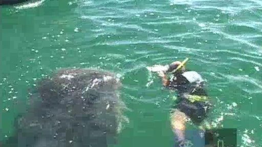 Whale Shark Encounter Video