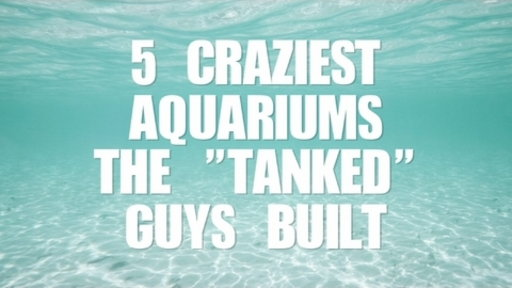 [5 Craziest Aquariums the Tanked Guys Built]