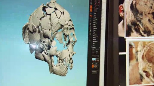 An Ancient Human Skull Video