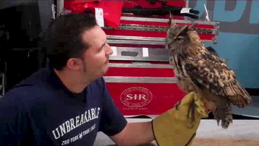 Animal Interviews: Eurasian Eagle Owl Video