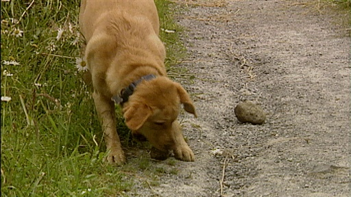 Rock-carrying Retriever, Fast walker, Anti-freeze Video