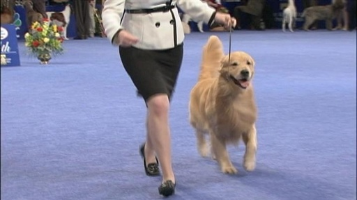 2009 National Dog Show Video