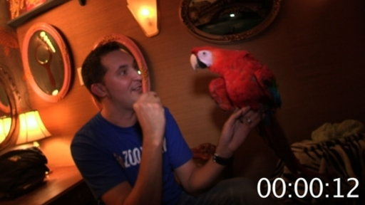 40-Something Seconds of Scarlet Macaw Facts Video
